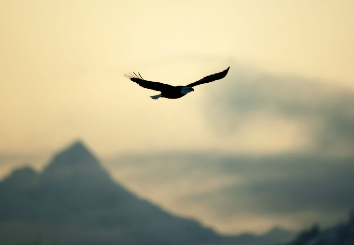 Let Go And Fly