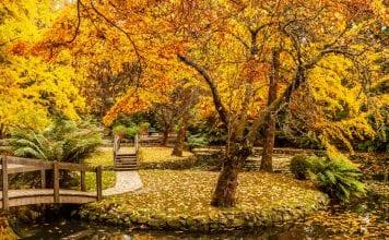 35 Autumn Quotes On Success